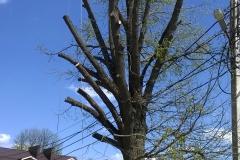 Кронирование деревьев....после