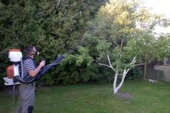 Обработка плодовых деревьев