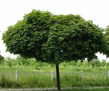 Крупномеры-Green Veles