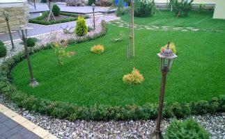 Газон и живая изгородь